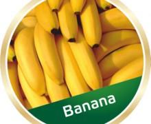 shisha-fruits-banana